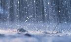 雨音で目覚める.jpg