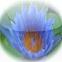 BudhPray Icon.jpg